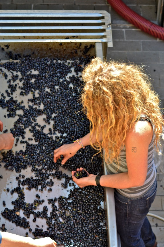 arianna-sorting-grapes.jpg