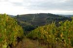 the-vineyard.jpg